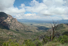 Northwest to the Mule Mountains