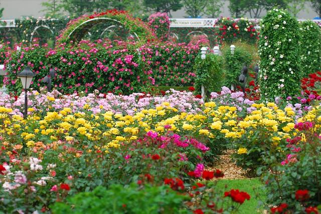 صور اجمل حدائق الورد 2013 ، صور حدائق الزهور 2013 ، صور حدائق ورد 2013 1057771047_2daba2ae80_z.jpg?zz=1
