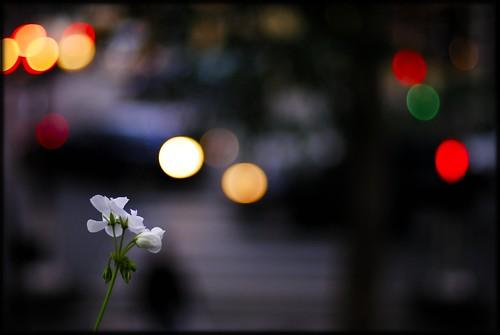BloomingInTheSpotlight