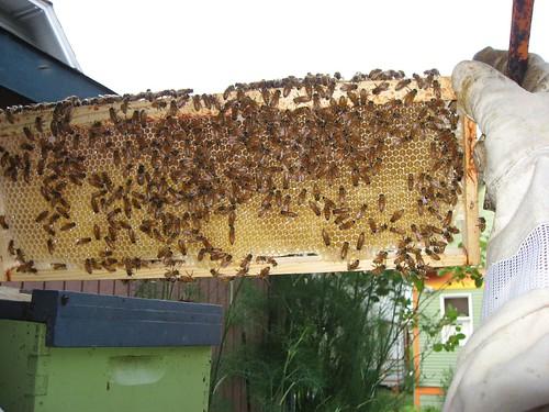 Beekeeping 2341