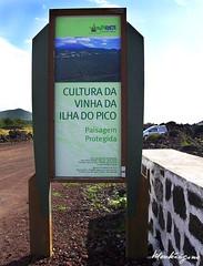 Cultura da Vinha da Ilha do Pico