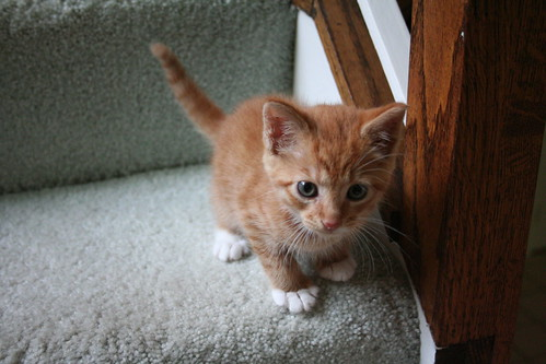 Milo - wee one on the stairs