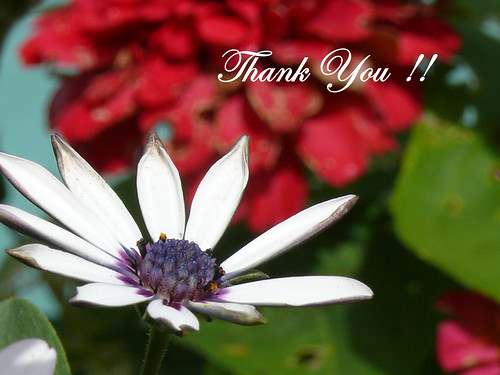 Thank You Everyone......!!!! by frazz46.