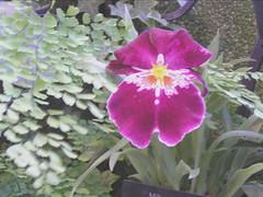 SUMMER FLOWERS 2007 (PHOTOPHANATIC1) Tags: flowers philadelphia orchids flowerpower longwood olympus765 summer2007