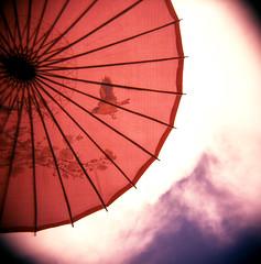 Rachael Ashe: Holga shot of Parasol