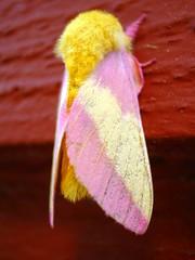 Pastel moth - by natalie boyne
