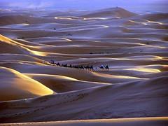 . (Color-de-la-vida) Tags: sunset sand desert dunes dune arena camel morocco puestadesol caravan duna marruecos coucherdesoleil caravana nomadic caravane ergchebbi camellos chameaux nomades nómadas colordelavida