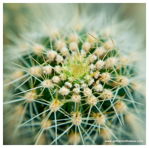 Fotografije kaktusa 847858419_e254588799