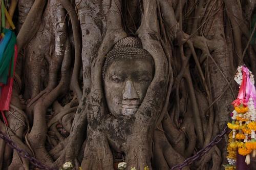 木に埋まった仏像の頭