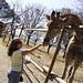 The hand that feeds the giraffe
