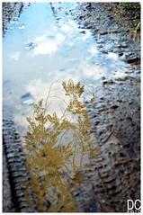 terra&cielo (mari digre) Tags: sky cielo terra acqua pozzanghera rilflessi