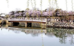 Bridge to the entrance of Himeji castle (Hopeisland) Tags: bridge pink flowers trees plant flower tree nature japan spring april sakura cherryblossoms colourful moat himejicastle       4