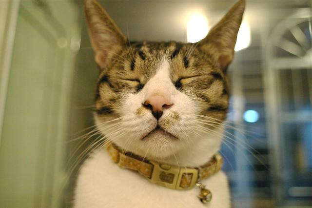 一邊整理防潮箱...一邊拍貓