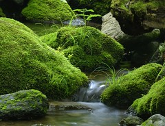Moss (BlueSkyinBY) Tags: longexposure green grass rock japan creek catchycolors geotagged tokyo moss nikon stream d200 naturesfinest allrightsreserved awesomenature chichibutamanationalpark superaplus aplusphoto favoritegarden diamondclassphotographer flickrdiamond superhearts geo:lat=35777175 geo:lon=139150997