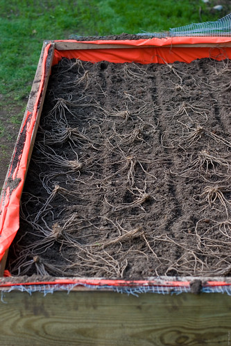 Garden Project: Asparagus bed