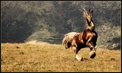 Freedom (acomellas) Tags: horse mountain landscape liberty caballo libertad freedom crazy jump salt free salto cavall loh llibertat galope mywinners anawesomeshot impressedbeauty trebinella