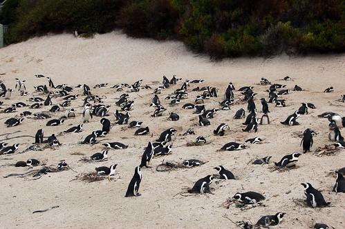 PenguinColony