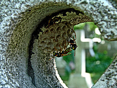 Random Hive (Random420) Tags: cemeteries philadelphia cemetery graveyard cross wasps hive stjamestheless 070707 stpetertheless