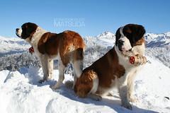 So Bernardo de Bariloche (poperotico) Tags: dog argentina perro cachorro bariloche saobernardo cerrootto