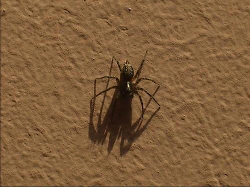 Arachnid Umbra