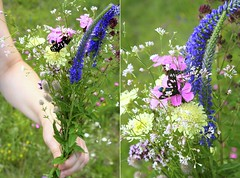 Un bouqet pour toi (Wonderfulife Productions) Tags: flowers summer butterfly insect moth bunch bouqet madow