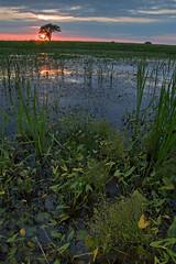Arrowhead Sunset (baldwinm16) Tags: sunset nature illinois forrest prairie preserve springbrook springbrookprairie crookedslough