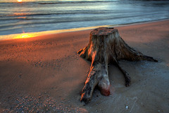 Still Morning (markofphotography) Tags: shells beach nature water wisconsin sunrise sand lakemichigan driftwood milwaukee urbannature mckinleybeach markofphotography
