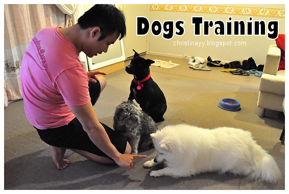 Chicken Rice Dinner: Dogs Training