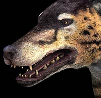 andrewsarchus face