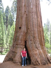 Joy in front of a Sequoia