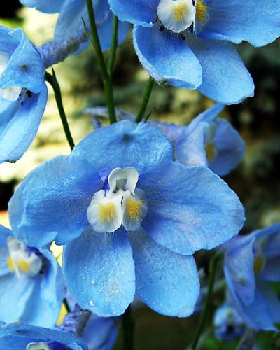 Popular Wedding Flower Colour, Marriage Flower Design, Wedding Flower  Arrangement,