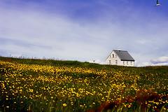 Klausturhlar (Rn) Tags: old flowers house iceland 2007 terns flatey rn magnsdttir