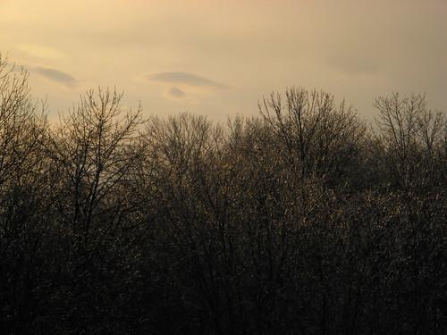 Icy Trees.jpg