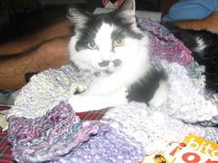 grouchohandspunscarf