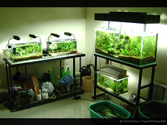 My Living Room (Aqua Samit) Tags: plants india fish plant green nature water roy leaves rock garden layout aquarium design leaf aqua underwater tank stones bangalore creative driftwood fishtank tropical greenery consultant aquatic freshwater aquascape planted consultancy samit aquaticgarden freshwateraquarium aquascaping aquarist samitroy