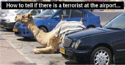 camel-090706
