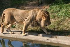 DC Zoo 346 (iamjosh) Tags: zoo dczoo
