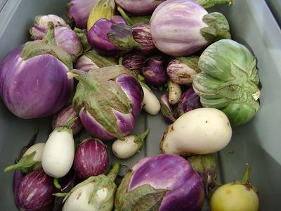 eggplant varieties at the Phoenix Market