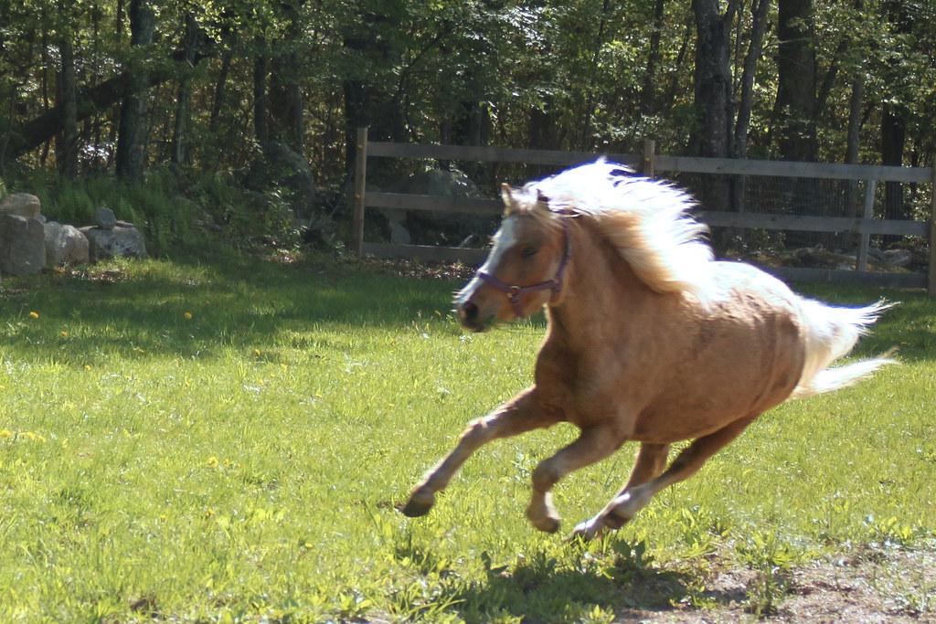horses 105x