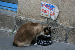While the DOG is away... (bigeoino) Tags: france cat roscoff bowl