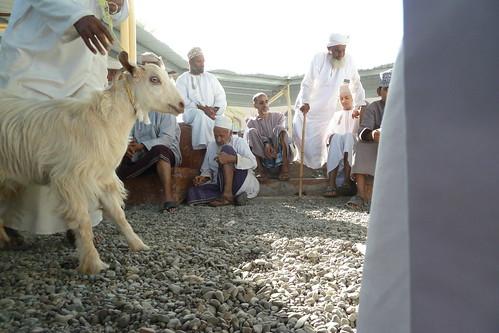 Goat time at the Nizwa livestock market