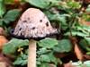 Mushroom in Autumn