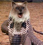 snakecate.jpg