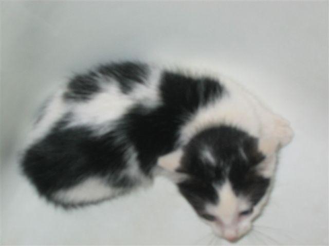 Kitty4