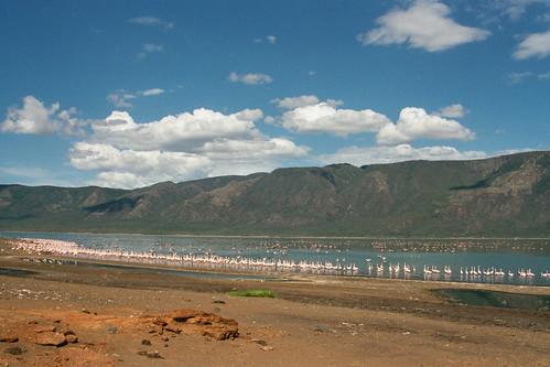 LB Lake Bogoria Flamingos Landscape