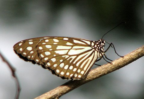 unid butterfly IISc