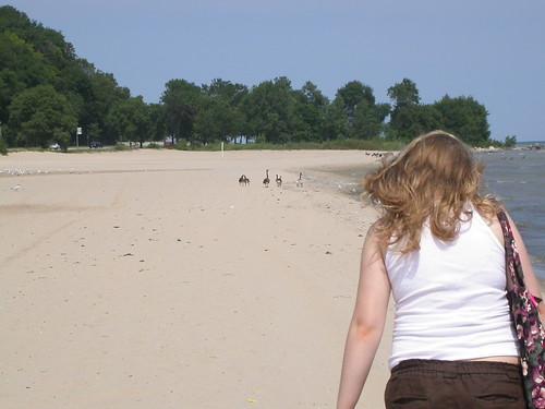 Stella, geese, beach, Lake Michigan