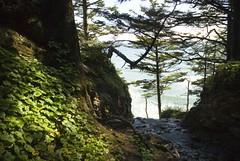 Oregon080.jpg (evanmitsui) Tags: oregon archcape oswaldstatepark