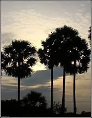 Tree !!!! (Rajarajan Photography) Tags: pondicherry