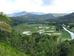 taro fields (find eric) Tags: hawaii kauai hanalei taro